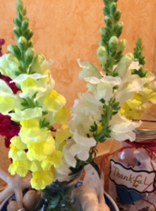 Thankful Snapdragons