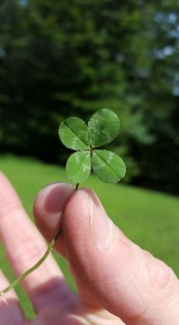 A Four-Leaf clover in hand