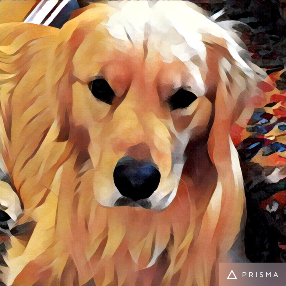 Stylized photo of Brodie the Golden Retriever