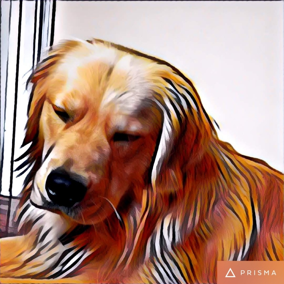 Golden retriever stylized photo