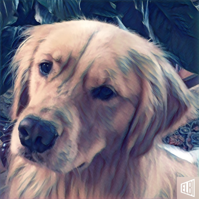 """Brodie the golden retriever yelps about the continued """"spin"""" on the outcomes of the first presidential debate"""