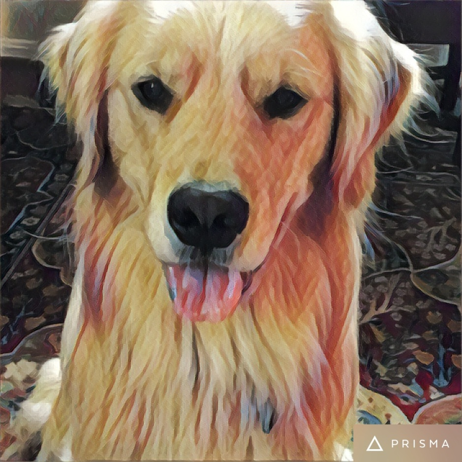 Golden Retriever Brodie shares an illuminating story about loyalty to The White House.