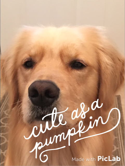 Brodie is cute as a pumpkin and talks about how dogs benefit from eating pumpkin