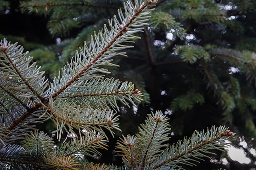 Evergreens offer shelter for birds in the winter months