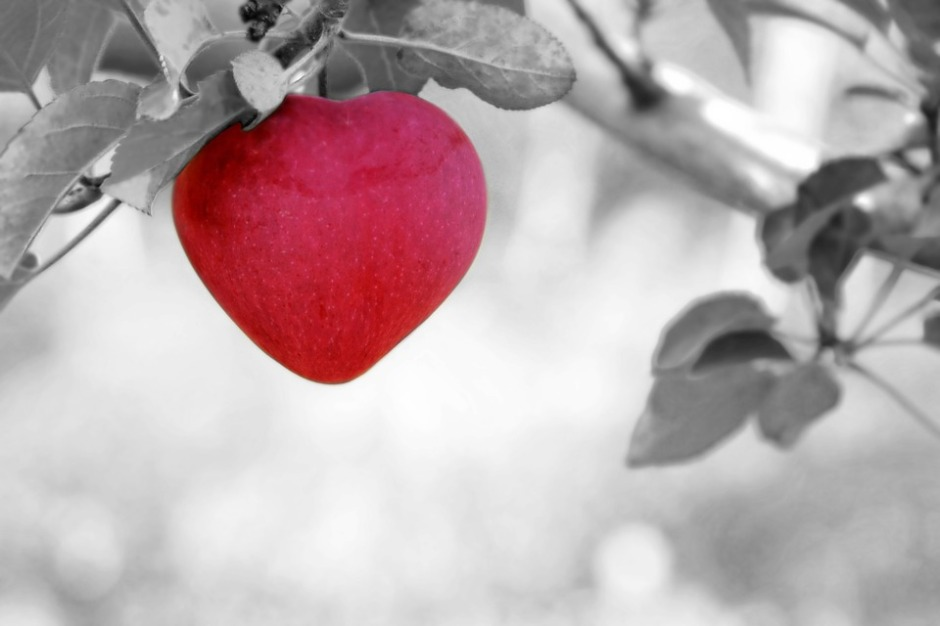 An apple that grows into the shape of a heart