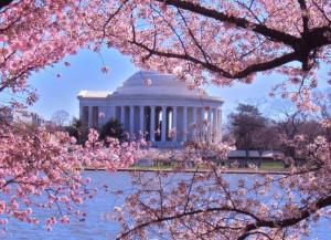 Cherry Blossoms-Tidal Basin, Washington, DC