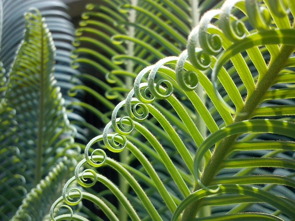 Exotic palm spiral frond