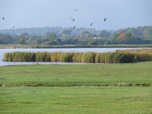 a thriving wetlands