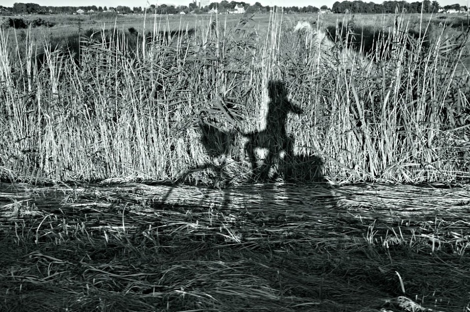 shadow of a girl on a bike against a field of weeds in black and white