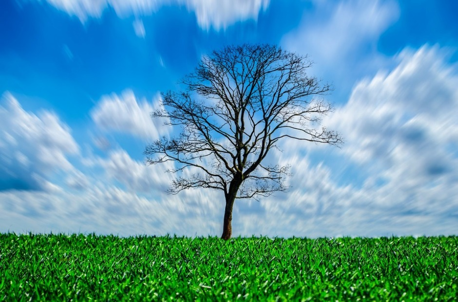 A leaning tree against a blue & cloudy sky setting in a green field