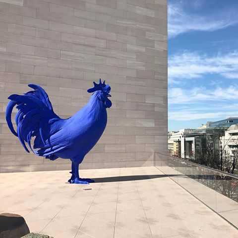 Plastic Blue Rooster Sculpture presiding over a new sculpture-garden-cum-terrace at our National Gallery of Art.