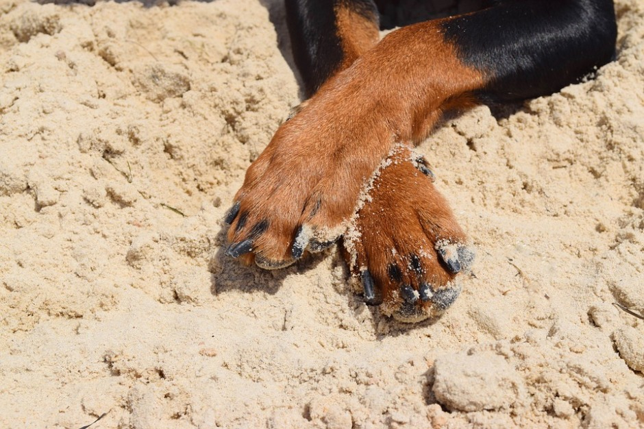 crossed dog paws on a sandy beach