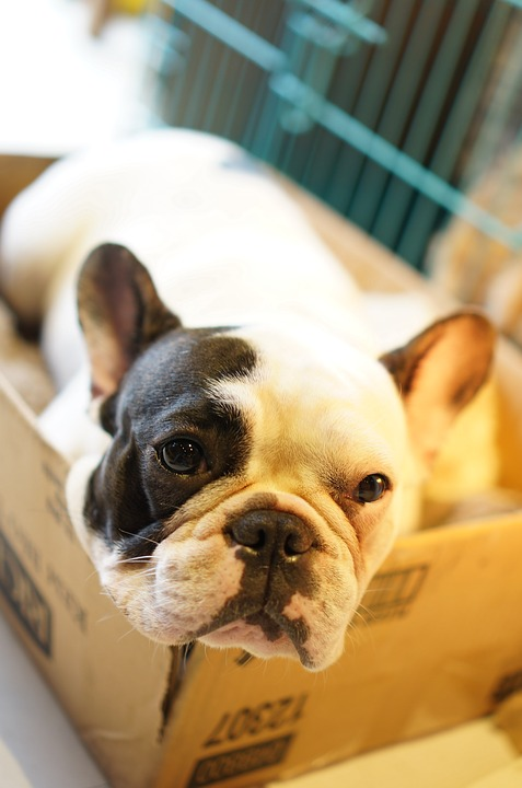 black and white dog in a box