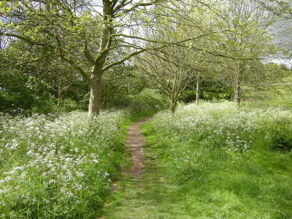 a path through the meadow and trees