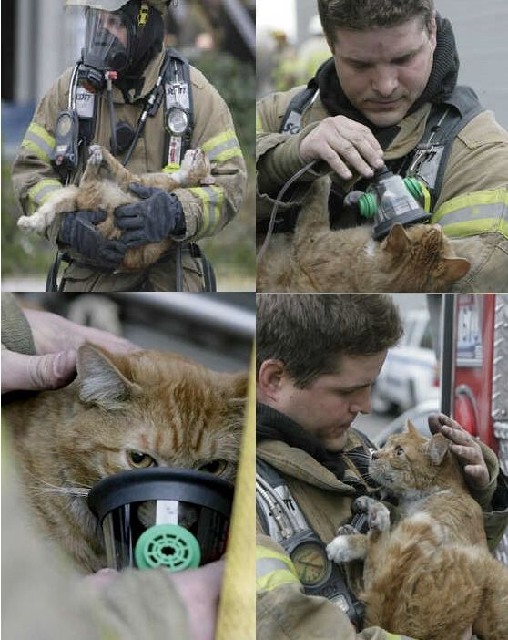 firemen-firefighters saving animals