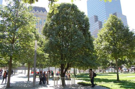 911 Memorial The tree that survived