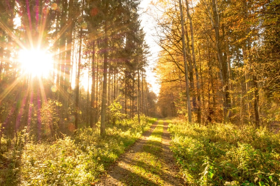 A path in the autumn woods with the morning sun rising