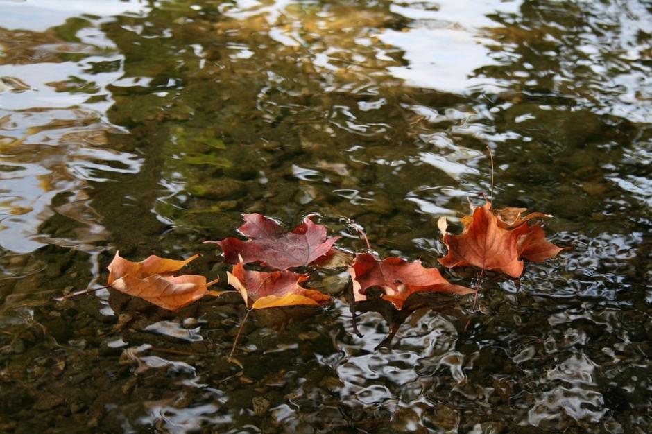 Red-orange dried leaves float in gentle rippling stream