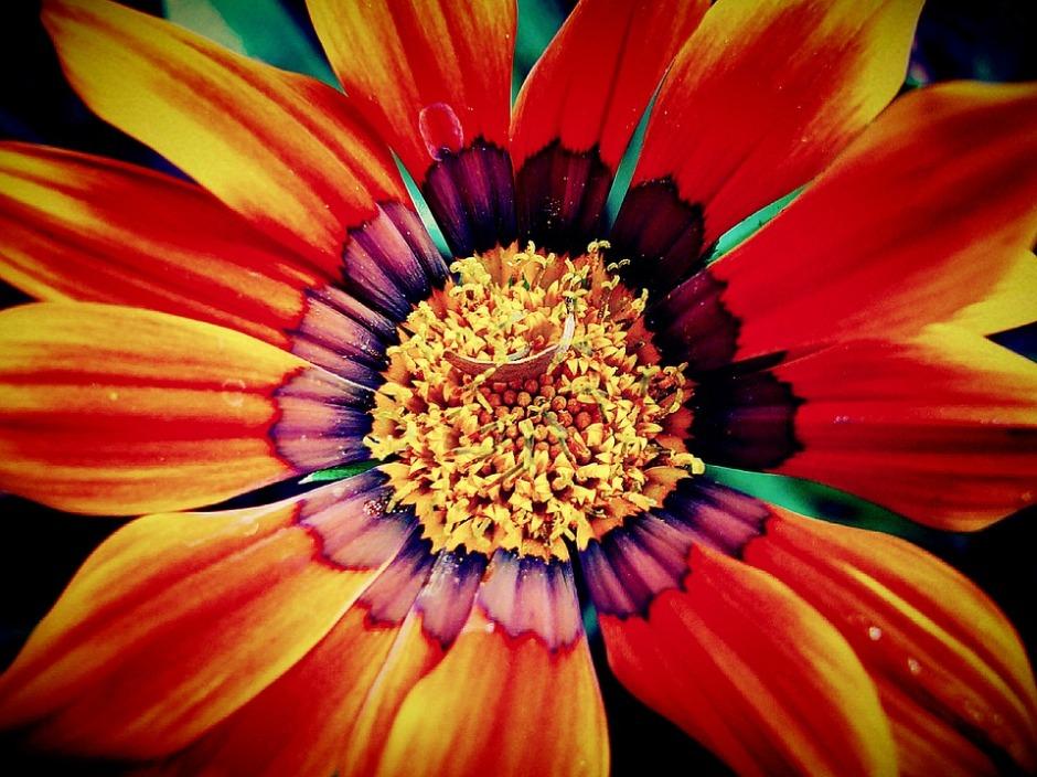 a close up of an autumn flowers center