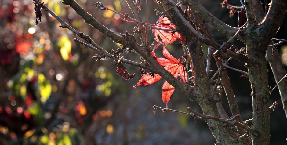 Two red leaves caught in bare tree branches in the autumn