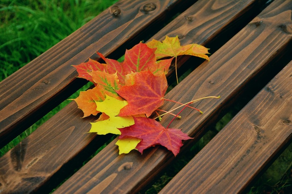 Fall foliage on a bench seat