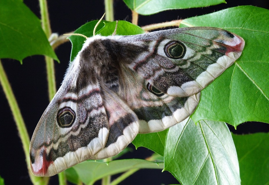 a moth spreads its wings while resting on a green vine