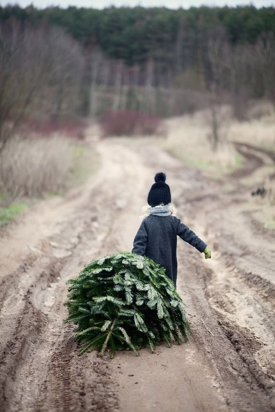 Photo of a child dragging a christmas tree compliments of Pinterest
