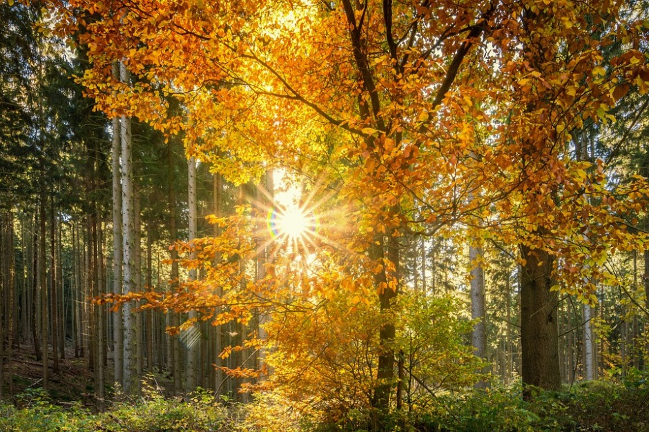 Sunbeams shine through autumn's trees