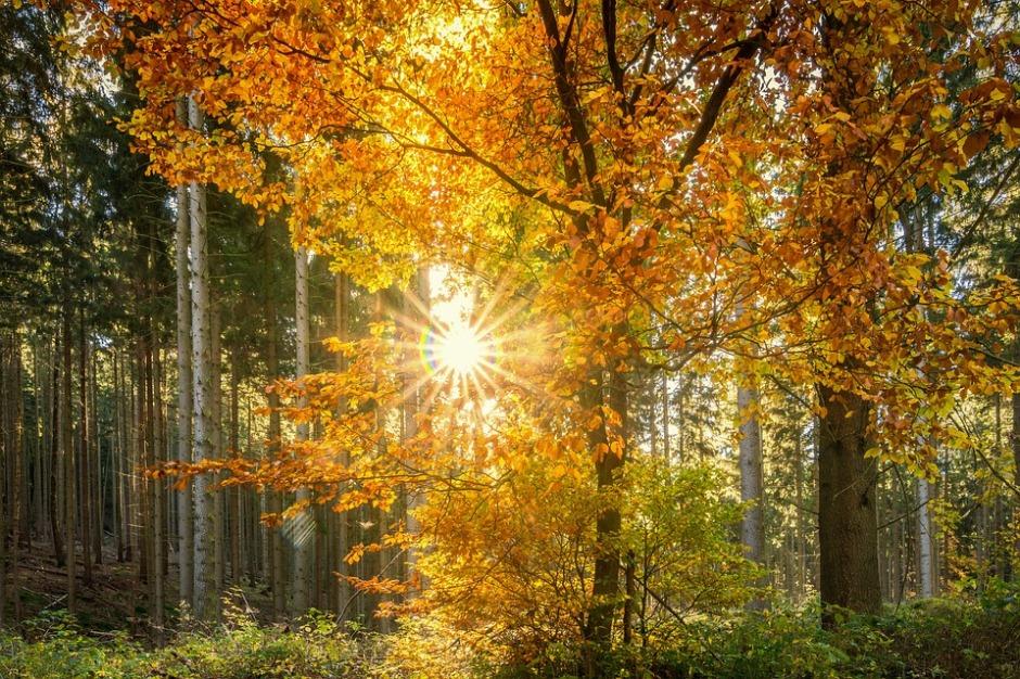 Sunbeams shine through autumn's trees