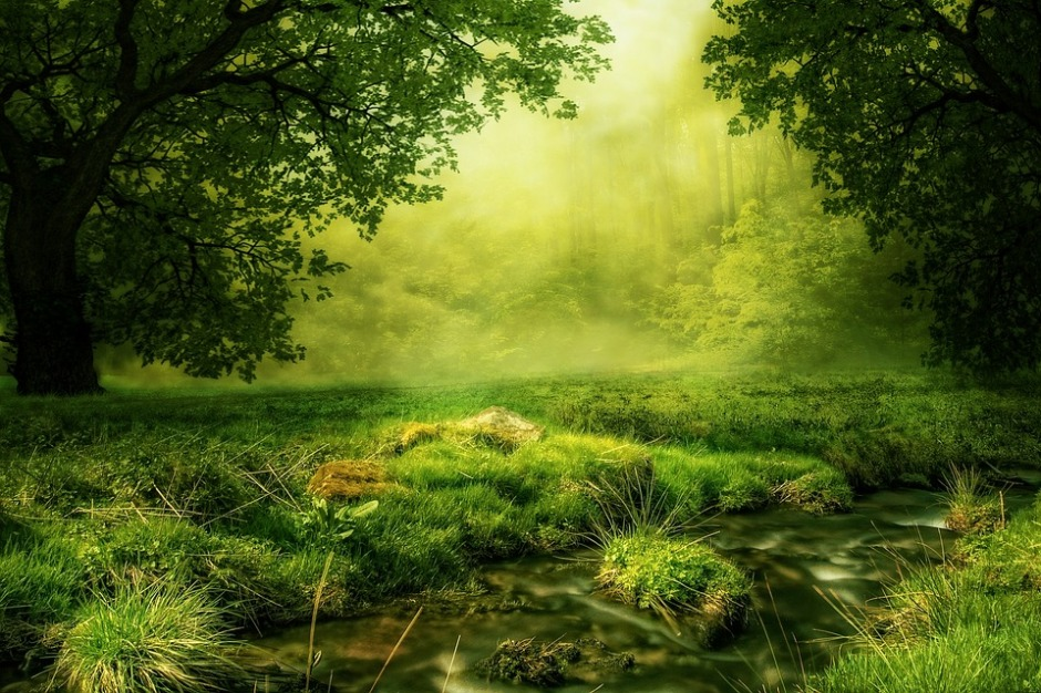 A glade very green and lush, looking like a mystical place