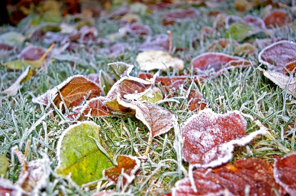 colorful autumn leaves covered with morning frost