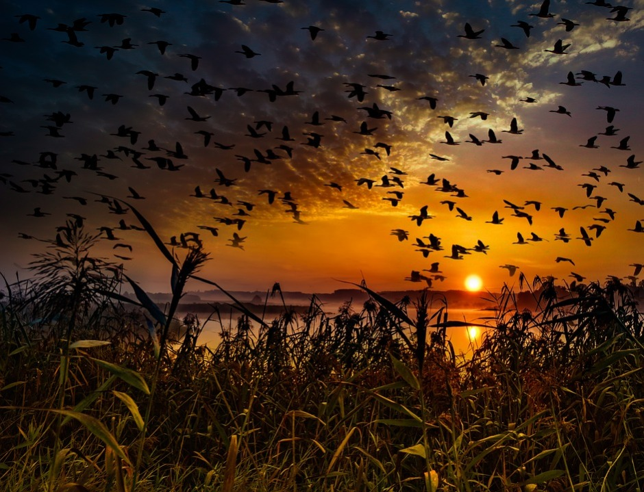 a fall sunset showing off migrating birds in flight