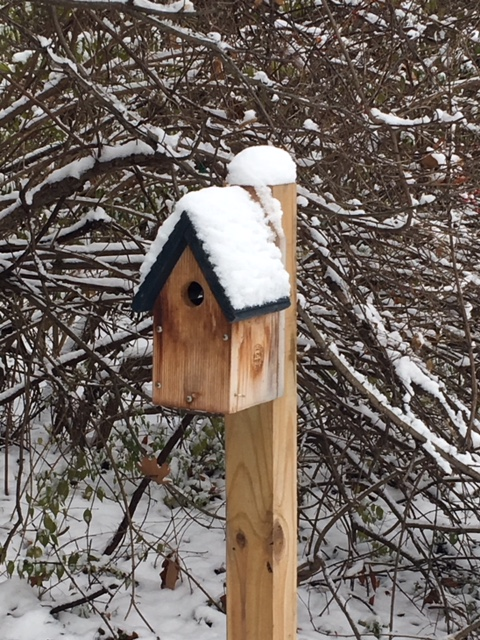 Bluebird house converted into a bird box for the winter