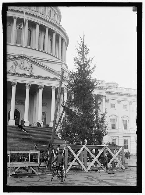 Capitol Christmas Tree 1913