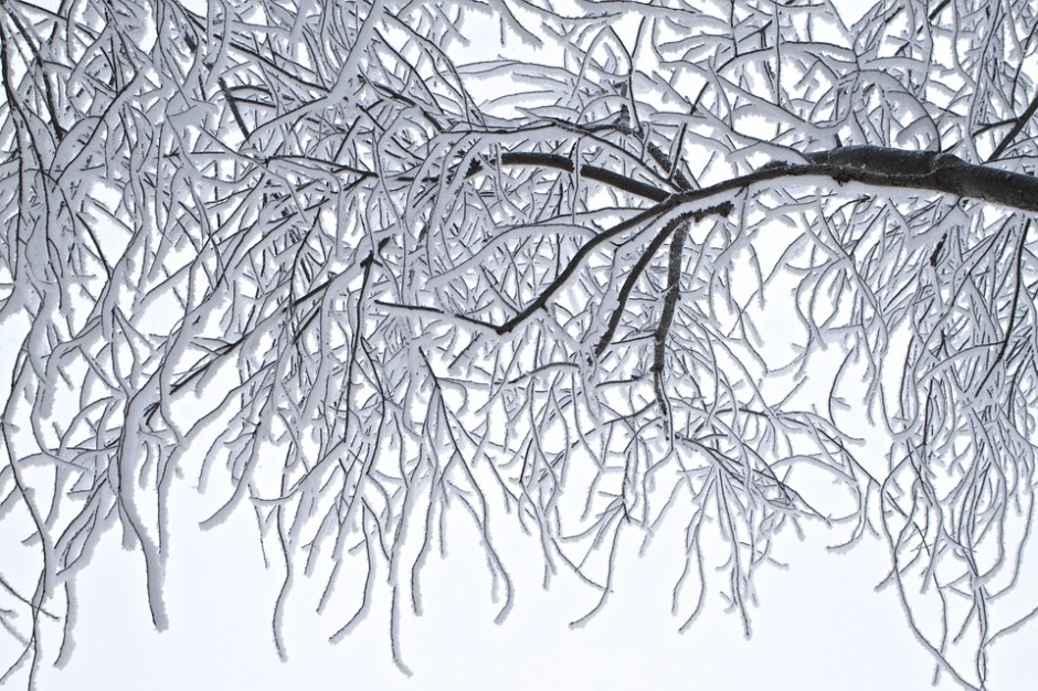 bending winter branches covered with snow