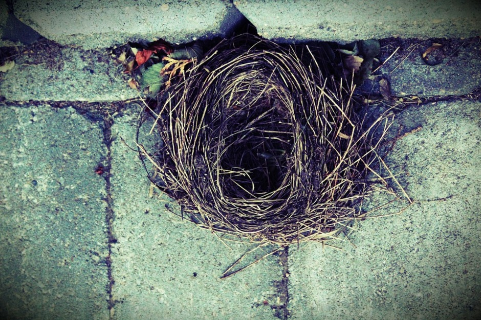 empty birds nest nestled in a concrete wall