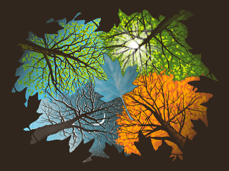 graphic of 4 seasons through leaves/color