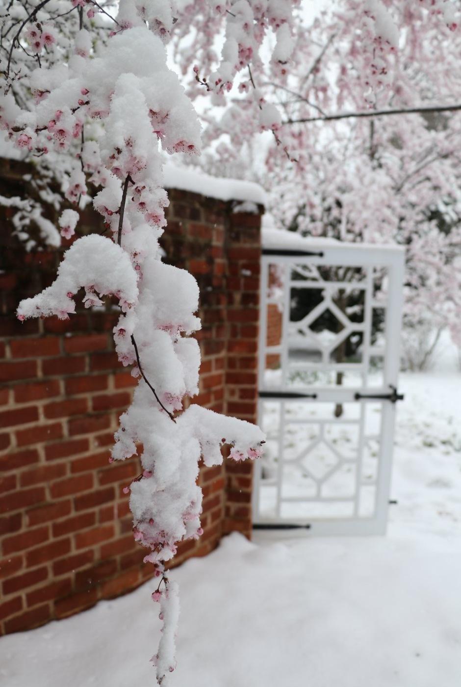 UVA Spring Snow 2018 taken by Elizabeth Roden