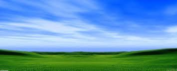 green field of grass under a blue sky