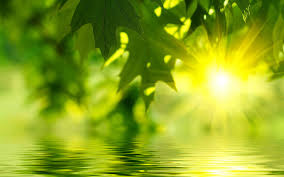 sunshine through the leaves on a tree