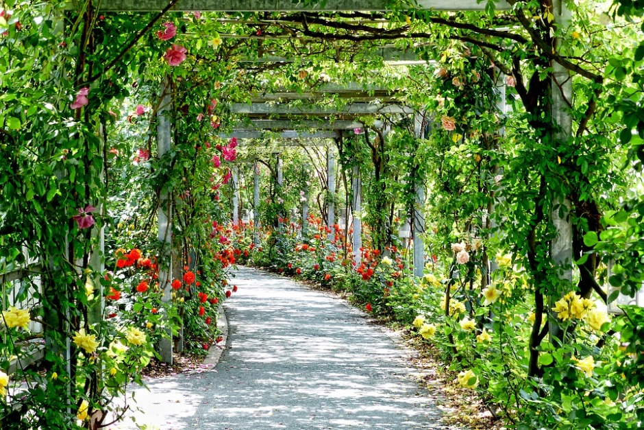 A vine covered walk-way