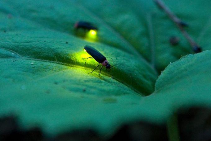 Firefly lighting at night