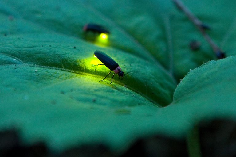 Firefly lighting at night