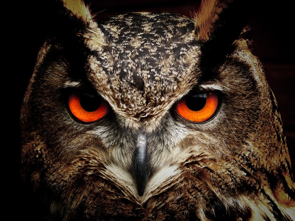 face of a wise owl with red eyes