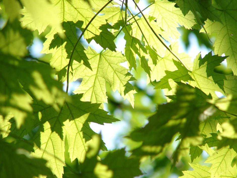 leaves in the sunshine casting shadows